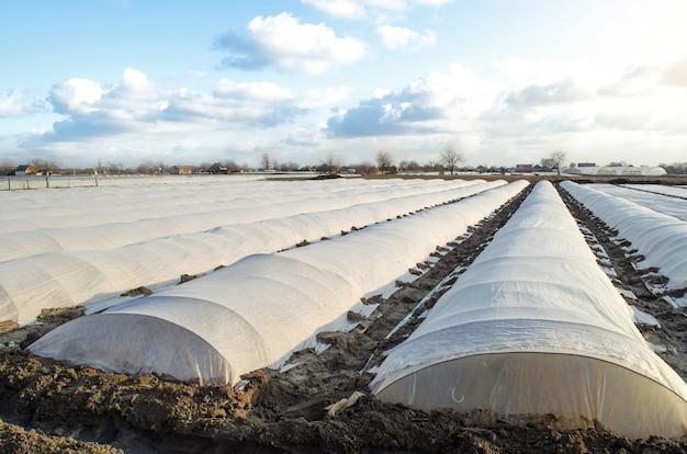 Aardappelen planten onder spingebonden en membraan in een boerenveld broeikaseffect voor bescherming