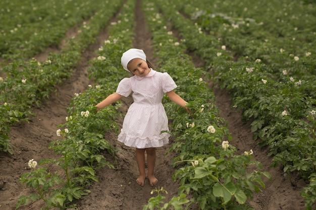 Aardappelplantbedden op een boerderij. jonge aardappelplant groeit op de bodem. aardappelen in de tuin op het hoogtepunt van de bloei.