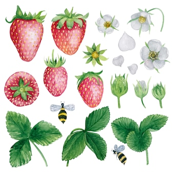 Aardbei plant delen aquarel clipart collectie bessen blad bloem bij