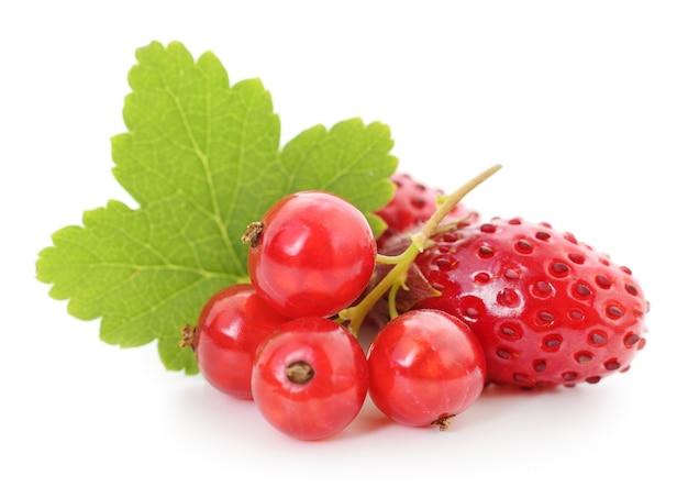 Aardbeien en rode aalbessen met bladeren op wit