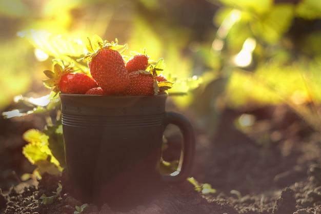 Aardbeien in een zwarte kop