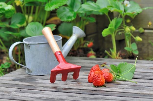 Aardbeien uit de tuin op een plank met een kleine gieter en hark