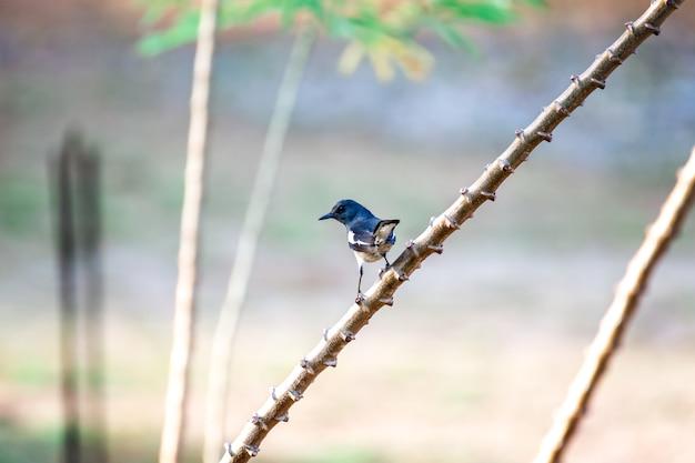 Aardfotografie van enige goudvinkvogel die op een boomtak neerstrijken in groen bos.