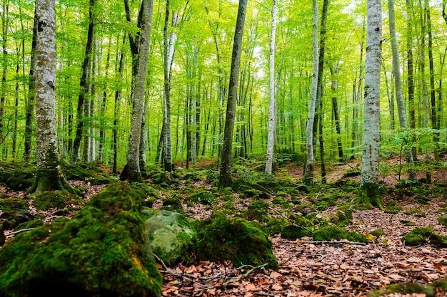 Aardlijst van de herfstbos van beukenbomen