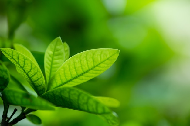Aardmening van groene blad abstracte achtergrond in tuin