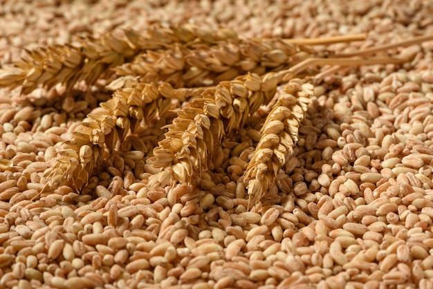 Aartjes van biologische spelt worden gevonden op tarwekorrels.