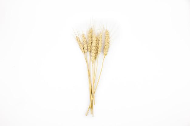 Aartjes van rijpe tarwe op een witte achtergrond isolate