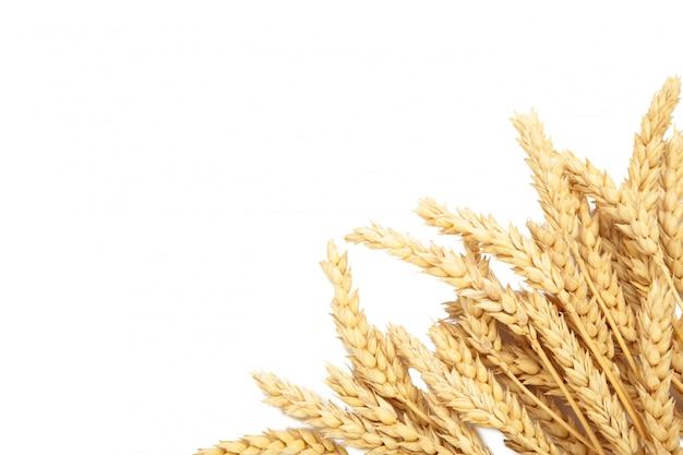 Aartjes van tarwe die op witte achtergrond wordt geïsoleerd