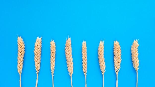Aartjes van tarwe op een blauwe achtergrond. eenvoudig plat leggen met kopie ruimte.
