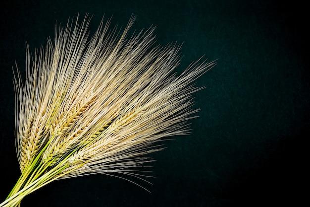 Aartjes van tarwe op een geïsoleerde zwarte achtergrond