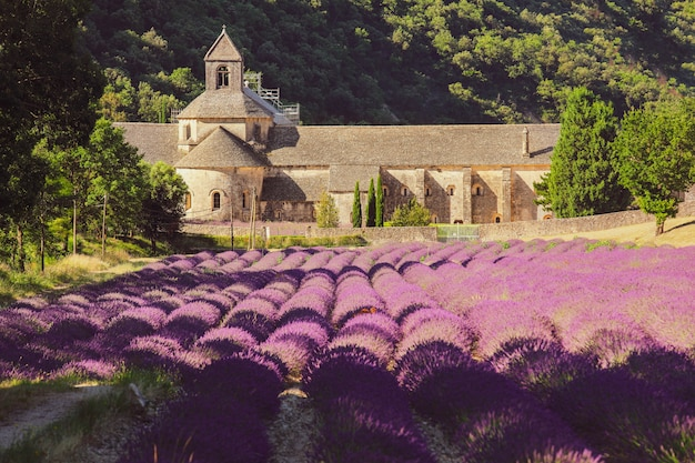 Abdij van senanque en veld van lavendelbloemen in bloei