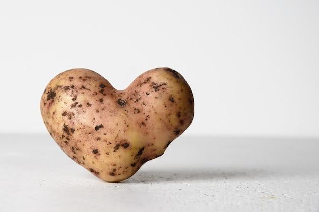 Abnormale aardappel in vorm van hart op witte concrete achtergrond. concept houdt van biologische, natuurlijke, lelijke groenten van eigen bodem. detailopname. kopieer ruimte.