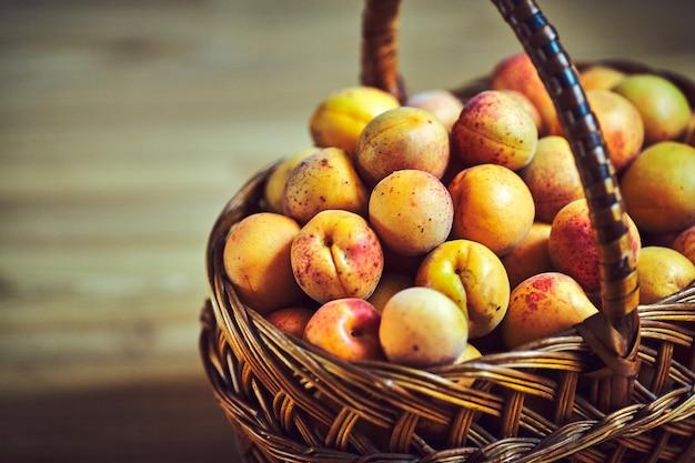 Abrikozen plukken in de mand. rijpe gele abrikoos. abrikozen close-up