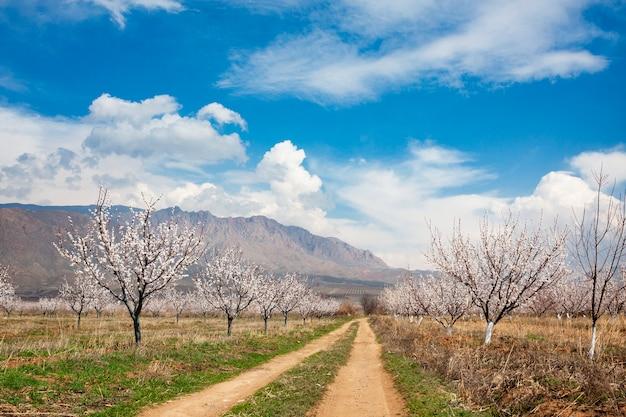 Abrikozenlandbouwbedrijf tijdens sping seizoen tegen vayk-bergketen, vayots dzor-provincie, armenië