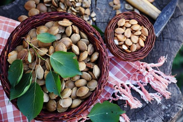 Abrikozenpitten op een stronk
