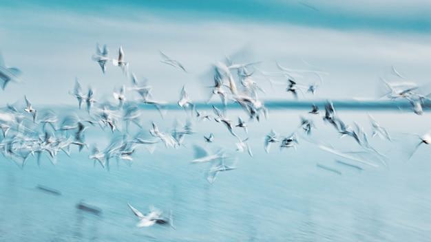 Abstract beeld van een groep zeevogels op de lucht