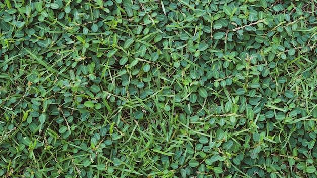 Abstract blad textuur tropisch blad gebladerte natuur donkergroene achtergrond