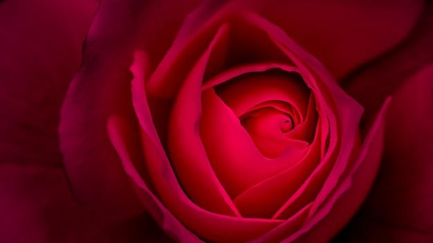 Abstract floral achtergrond rood roze bloemblaadjes macro bloemen achtergrond voor vakantie ontwerp soft
