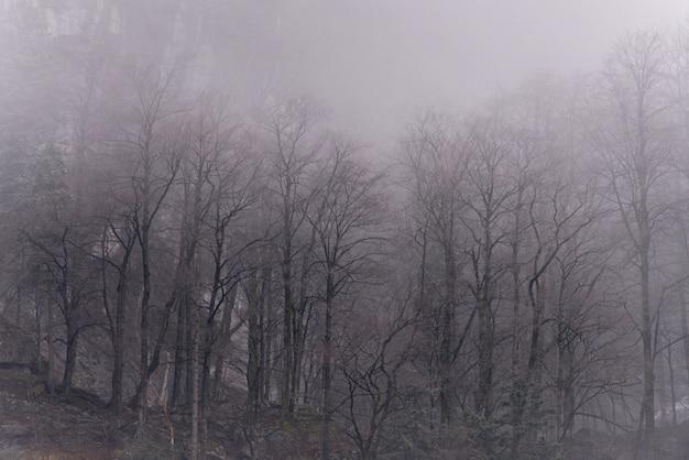 Abstract landschap met mist in het bos op een ochtenddag in de bergen. panorama van mistig bos.