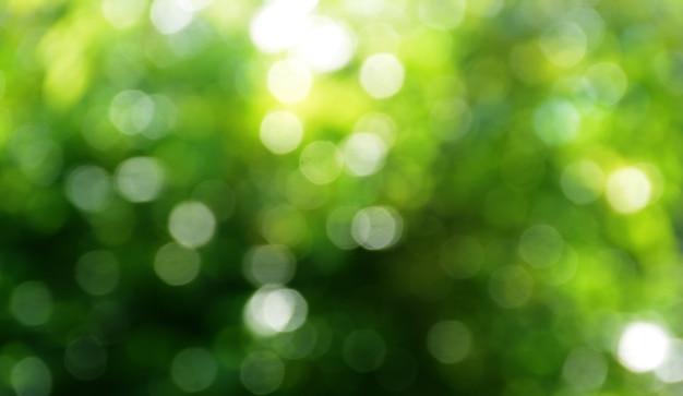 Abstract natuur bokeh achtergrond groene lente bladeren prachtig vervaagd in groene bokeh