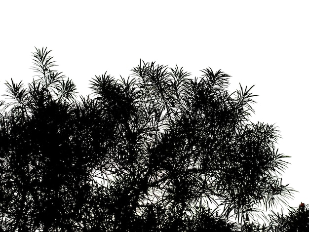 Abstract patroon, silhouetten van bladeren
