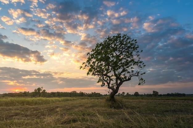 Abstracte aard magische zonsopgang met boomachtergrond.