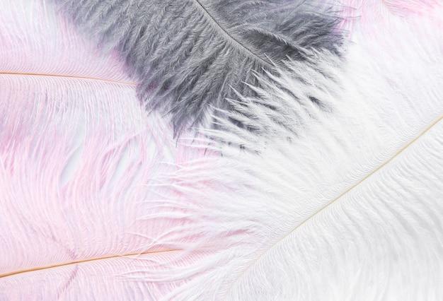 Abstracte achtergrond. achtergrond met zachte kleurrijke veren op wit