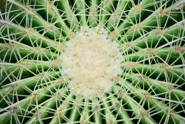 Abstracte achtergrond textuer van cactus succulente installatie