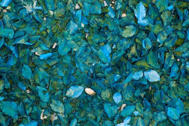 Abstracte achtergrond van blauwe herfstbladeren. bovenaanzicht.