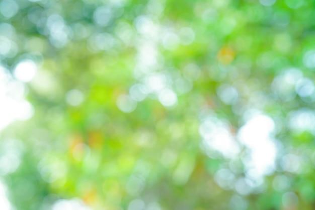 Abstracte achtergrond van de de aardpark van de onduidelijk beeld bokeh verse bladboom.