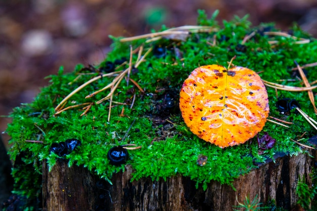 Abstracte achtergrond van herfstbladeren. herfst achtergrond. het verwelken van de natuur in het bos, de wisseling van de seizoenen