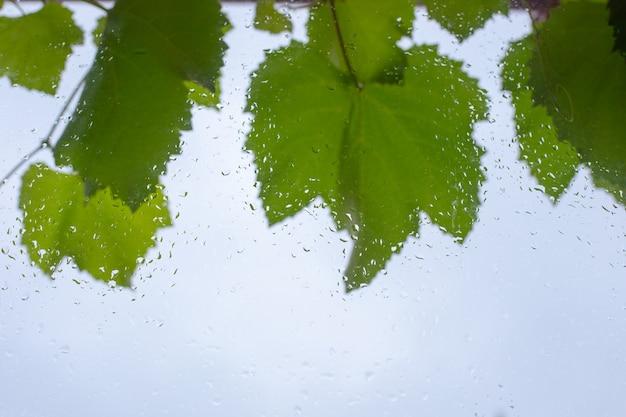 Abstracte achtergrond van nat glas met regendruppels en druivenbladeren.