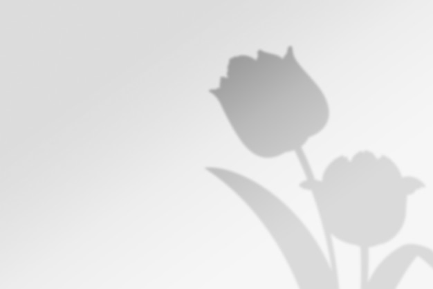 Abstracte achtergrond van schaduwen bloemen op witte muur
