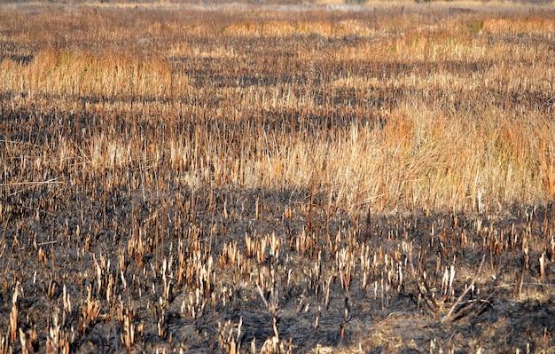 Abstracte achtergrond verbrand gras, lichtbruin filter