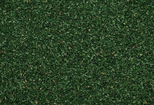 Abstracte blad peterselie vlokken textuur achtergrond background