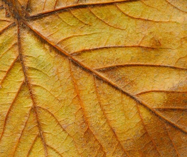 Abstracte bladaders. de bruine herfst verlaat dicht omhoog.