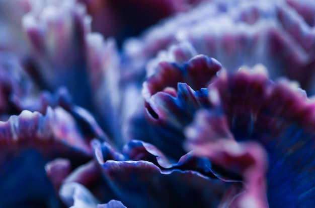 Abstracte bloemen achtergrond blauwe anjer bloem macro bloemen achtergrond voor vakantie merk design