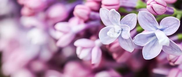 Abstracte bloemen achtergrond bloeiende tak paarse badstof lila bloemblaadjes