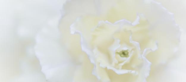 Abstracte bloemen achtergrond witte anjer bloem macro bloemen achtergrond voor vakantie merk design