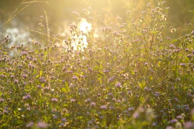 Abstracte de zonsondergang zachte lichte en uitstekende toon van de bloemavond.