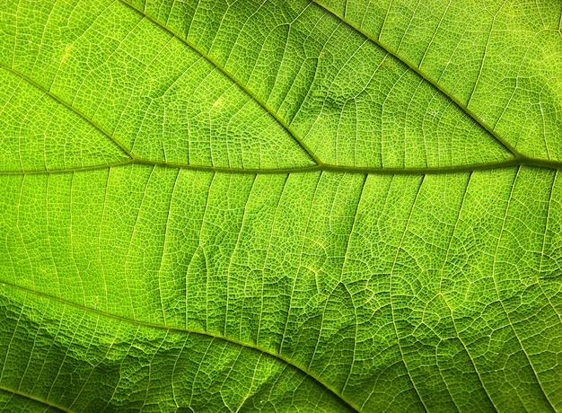 Abstracte groene bladtextuur voor achtergrond