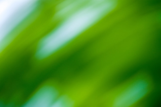 Abstracte groene bokehachtergrond