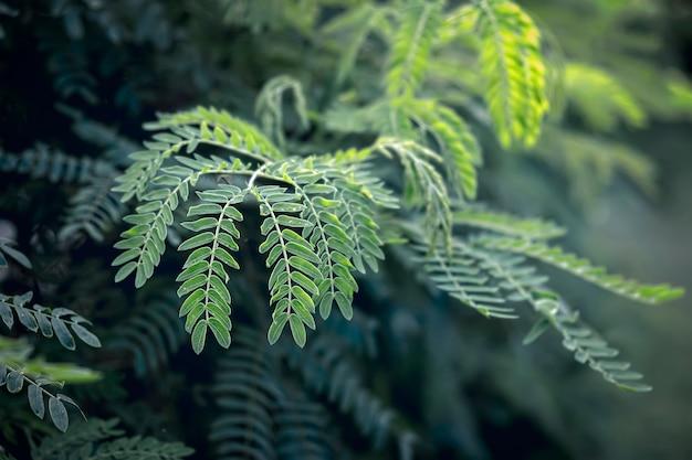 Abstracte groene tropische leafâ € ™ s textuur, achtergrond van de aard de donkere toon, tropisch blad