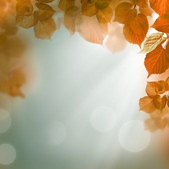 Abstracte herfst achtergrond met bladeren en avondlicht