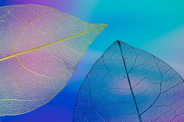 Abstracte kleurrijke herfstbladeren