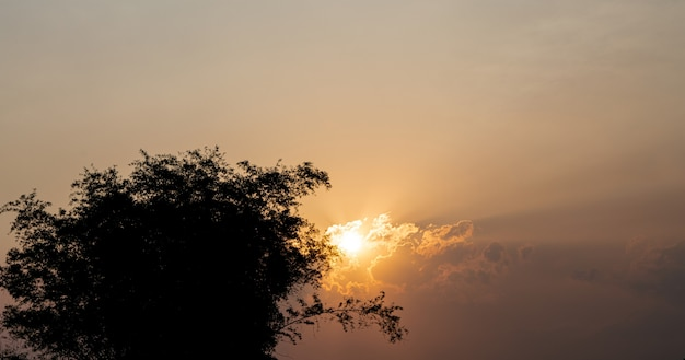 Abstracte landschapszonsondergang met silhouet van bomen voor aardachtergrond
