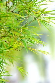 Abstracte lente groene achtergrond met bamboe bladeren