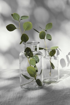 Abstracte minimale concept bladeren en schaduwen