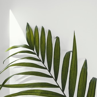 Abstracte minimale plant binnenshuis laat close-up