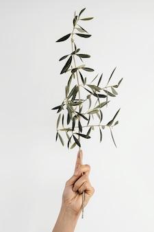 Abstracte minimale plant die in de hand wordt geholpen